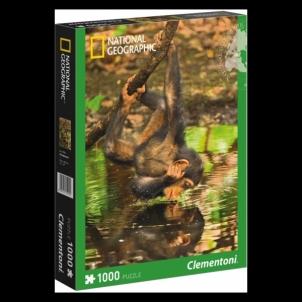 Dėlionė 1000 National Geographic - Chimpanzee