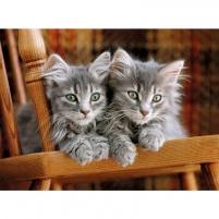 Dėlionė PZL 500 Kittens