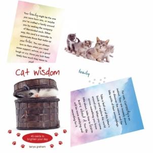 Kortos Cat Wisdom
