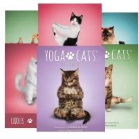 Kortos Yoga Cats Challenges