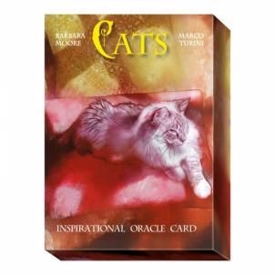 Oracle Kortos Cats Inspirational
