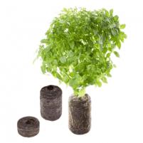 Sėklos Tregren Oregano, 2 seed pods, SEEDPOD02 Išmanūs vazonai, daigyklės