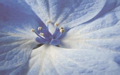 25*40 ACAPULCO BLUE INS KWIAT, dekoruota plytelė Paveikslėlis 1 iš 1 237751001935