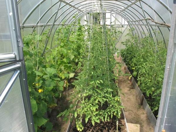 Greenhouse Trioška (48m2) 16000x3000 4mm Paveikslėlis 3 iš 4 310820073814