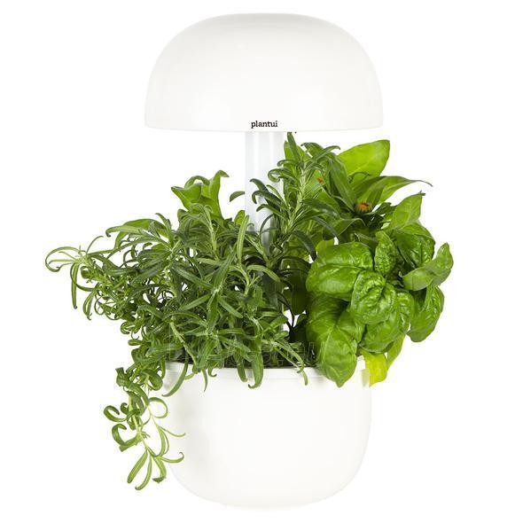 Išmanusis vazonas- daigyklė Plantui Smart Garden 3e Paveikslėlis 4 iš 8 310820193436