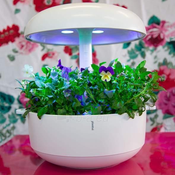Išmanusis vazonas- daigyklė Plantui Smart Garden 6, baltas Paveikslėlis 2 iš 13 310820193437
