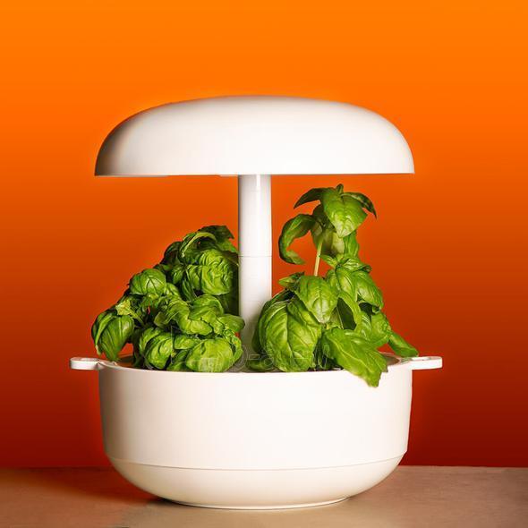 Išmanusis vazonas- daigyklė Plantui Smart Garden 6, baltas Paveikslėlis 1 iš 13 310820193437