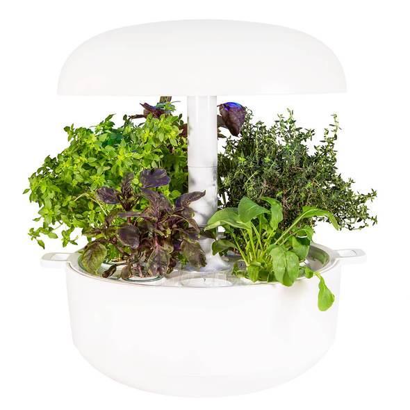 Išmanusis vazonas- daigyklė Plantui Smart Garden 6, baltas Paveikslėlis 12 iš 13 310820193437