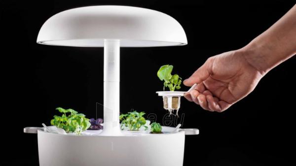 Išmanusis vazonas- daigyklė Plantui Smart Garden 6, baltas Paveikslėlis 13 iš 13 310820193437
