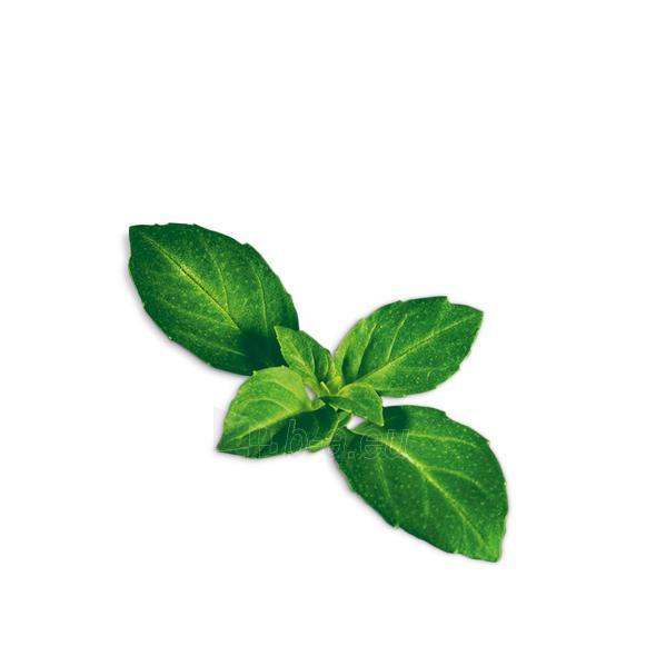 Augalų (sėklų) kapsulės Plantui, Basil Minette (Kvapusis bazilikas) Paveikslėlis 3 iš 5 310820193516