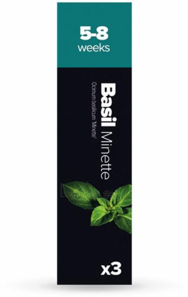 Augalų (sėklų) kapsulės Plantui, Basil Minette (Kvapusis bazilikas) Paveikslėlis 1 iš 5 310820193516