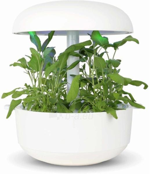 Augalų (sėklų) kapsulės Plantui, Sage (Šalavijas) Paveikslėlis 2 iš 8 310820193521
