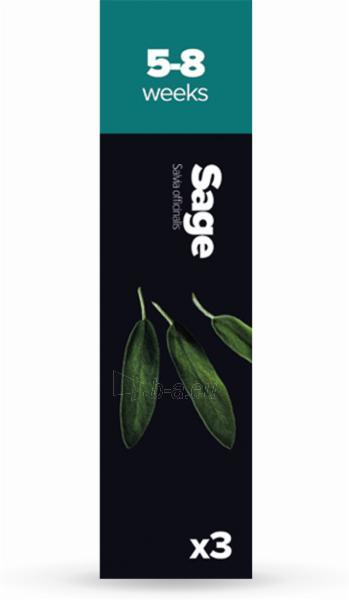 Augalų (sėklų) kapsulės Plantui, Sage (Šalavijas) Paveikslėlis 1 iš 8 310820193521