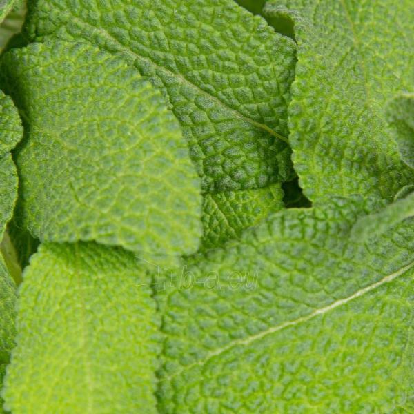 Augalų (sėklų) kapsulės Plantui, Sage (Šalavijas) Paveikslėlis 5 iš 8 310820193521