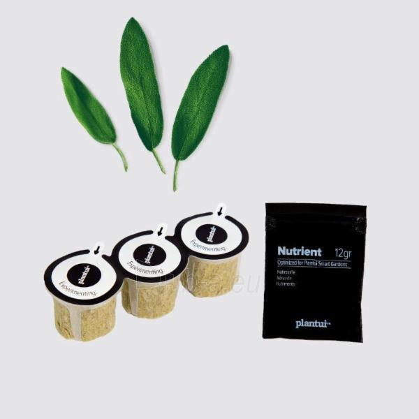 Augalų (sėklų) kapsulės Plantui, Sage (Šalavijas) Paveikslėlis 6 iš 8 310820193521