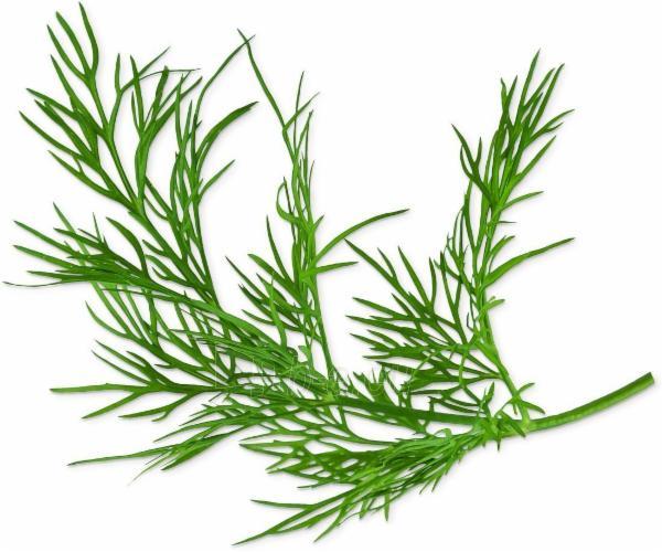 Augalų (sėklų) kapsulės Plantui, Dill (Krapai) Paveikslėlis 2 iš 4 310820193522