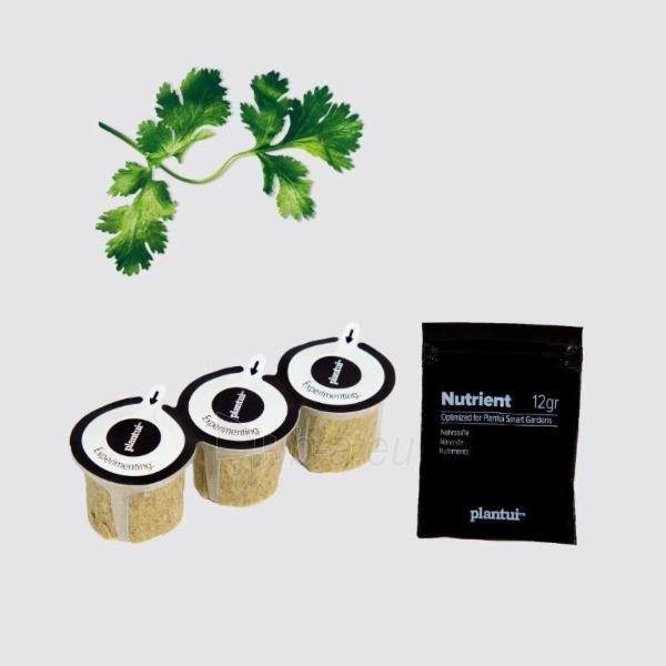 Augalų (sėklų) kapsulės Plantui, Coriander (Kalendra) Paveikslėlis 5 iš 7 310820193524