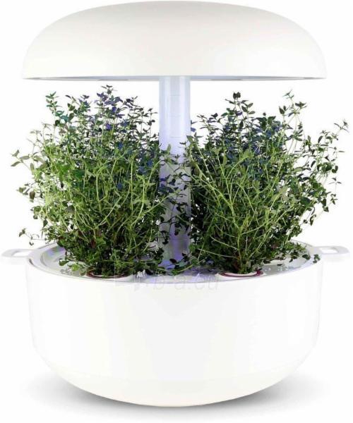 Augalų (sėklų) kapsulės Plantui, Thyme (Čiobreliai) Paveikslėlis 2 iš 7 310820193525