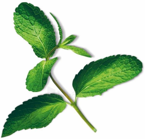 Augalų (sėklų) kapsulės Plantui, Mint (Mėtos) Paveikslėlis 9 iš 10 310820193528