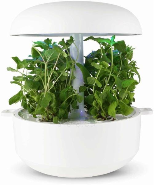 Augalų (sėklų) kapsulės Plantui, Mint (Mėtos) Paveikslėlis 8 iš 10 310820193528