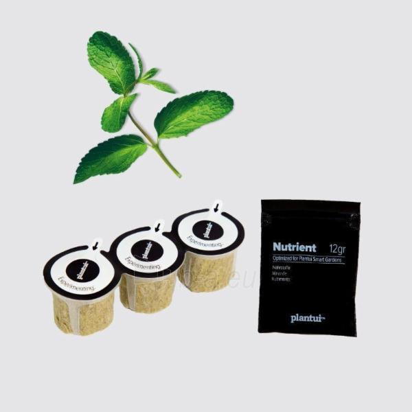 Augalų (sėklų) kapsulės Plantui, Mint (Mėtos) Paveikslėlis 6 iš 10 310820193528