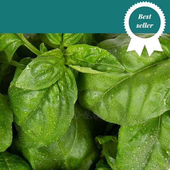 Augalų (sėklų) kapsulės Plantui, Basil Genoveser (Basilikas Genoveser) Paveikslėlis 2 iš 5 310820193535