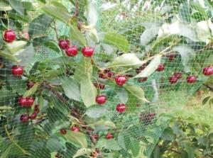 Apsauginis tinklas nuo paukščių, žalias Paveikslėlis 1 iš 2 310820068102