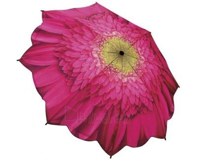 Blooming Brollies Moteriškas Automatinis Skėtis Galleria Gerbera Daisy Floral GFFGD Paveikslėlis 1 iš 1 30101500015