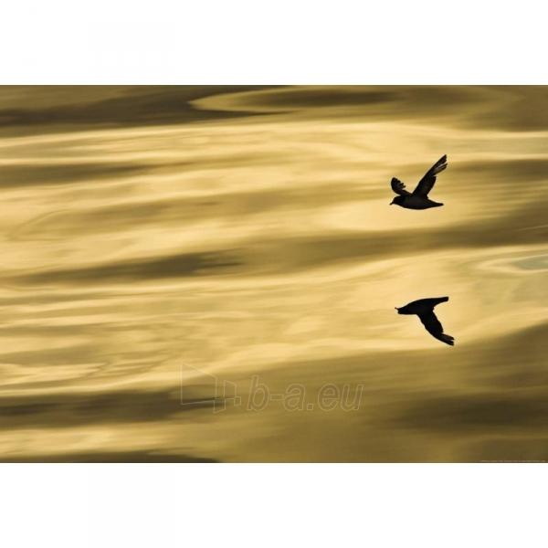 Fototapetas Komar 1-604 Reflection Paveikslėlis 1 iš 1 30110100114
