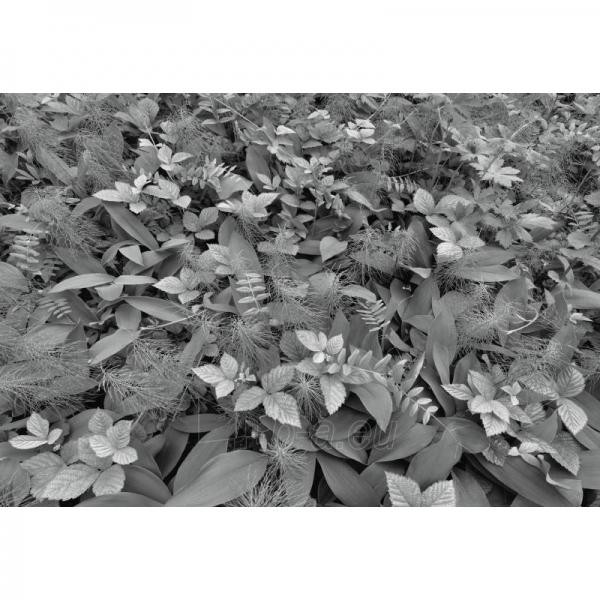 Fototapetas Komar 8-914 Forest Floor, 368 × 254 cm Paveikslėlis 1 iš 1 30110100127