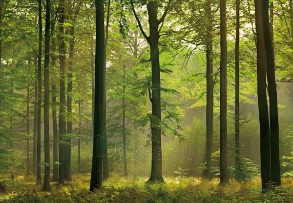 216 AUTUMN FOREST 3,66x2,54 m, 8 dalių fototapetas Paveikslėlis 1 iš 1 30110100020