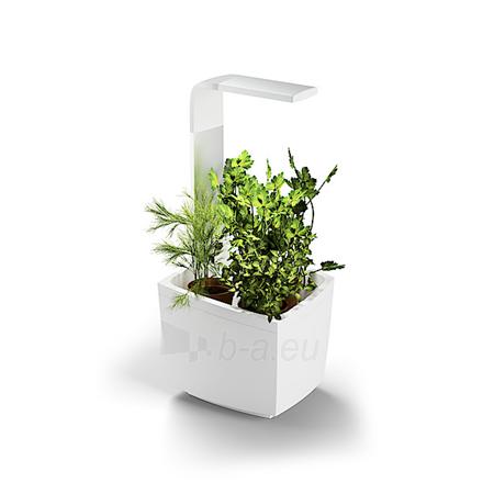 Išmanusis vazonas- daigyklė Tregren Kitchen Garden, T3, White, LED, 193x175x440 mm, 6 seed pods pc(s), Wi-Fi controlled, Smartphone remote support Paveikslėlis 1 iš 1 310820191903