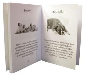 Kortos Inspirational Dog Wisdom Paveikslėlis 2 iš 7 310820142675