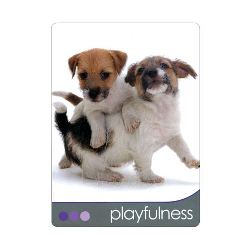 Kortos Inspirational Dog Wisdom Paveikslėlis 4 iš 7 310820142675