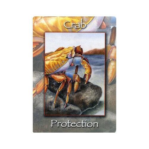 Kortos Nature's Wisdom Oracle Paveikslėlis 4 iš 9 310820217249