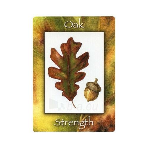 Kortos Nature's Wisdom Oracle Paveikslėlis 5 iš 9 310820217249