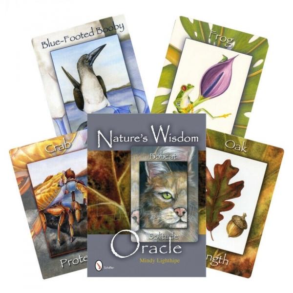Kortos Nature's Wisdom Oracle Paveikslėlis 9 iš 9 310820217249