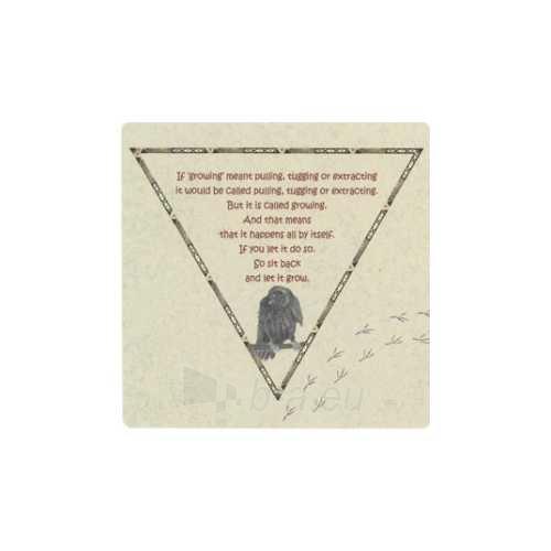 Kortos Oracle Kortos Raven Paveikslėlis 4 iš 5 310820142794