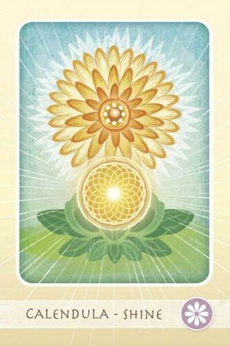 Kortos Taro Herbal Healing Deck Paveikslėlis 5 iš 7 310820217196