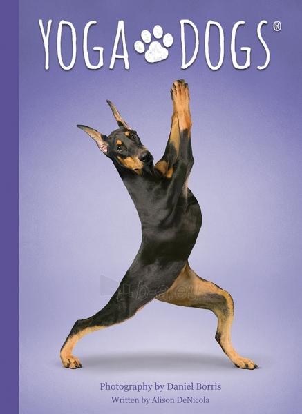 Kortos Yoga Dogs Challenges Paveikslėlis 2 iš 9 310820142760