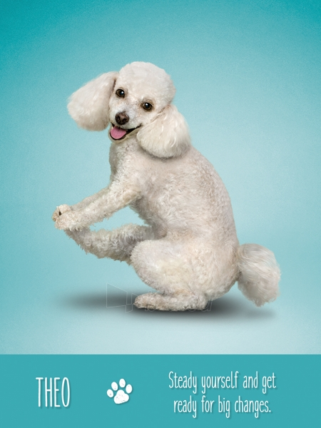Kortos Yoga Dogs Challenges Paveikslėlis 3 iš 9 310820142760
