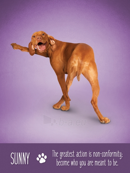 Kortos Yoga Dogs Challenges Paveikslėlis 4 iš 9 310820142760