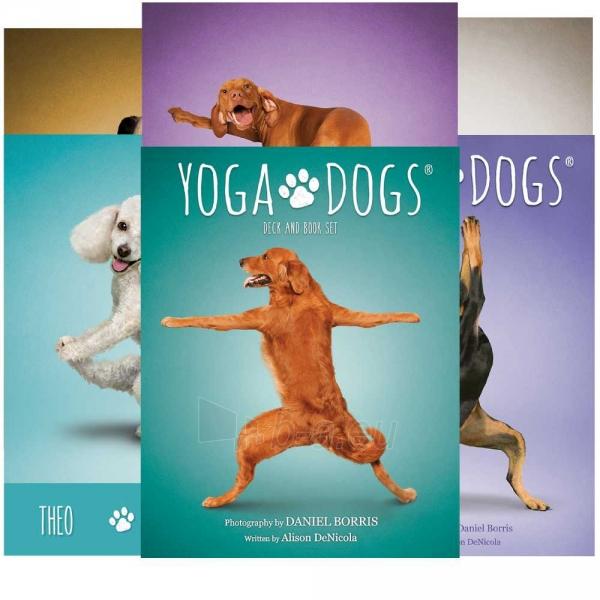 Kortos Yoga Dogs Challenges Paveikslėlis 6 iš 9 310820142760