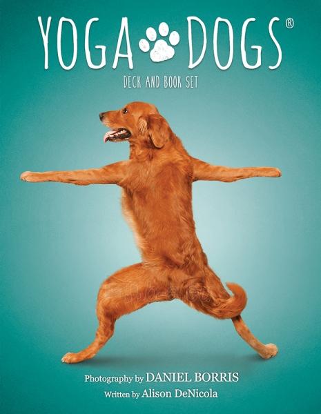 Kortos Yoga Dogs Challenges Paveikslėlis 7 iš 9 310820142760