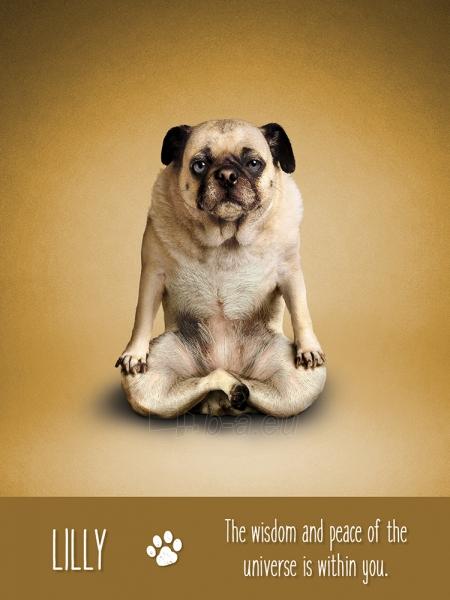 Kortos Yoga Dogs Challenges Paveikslėlis 8 iš 9 310820142760