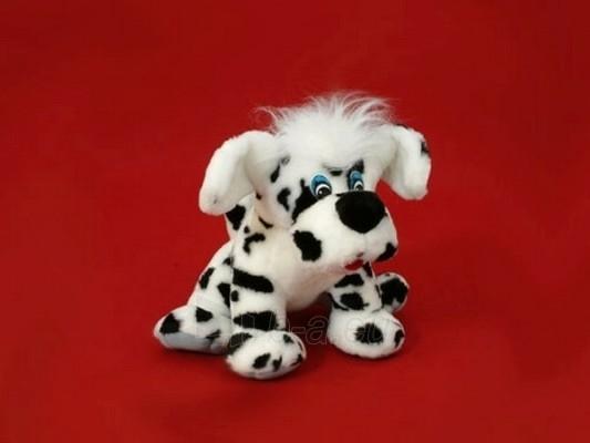 Šuo Toška mažas TM-1 40 x 43 x 38 cm Paveikslėlis 2 iš 2 250710400001