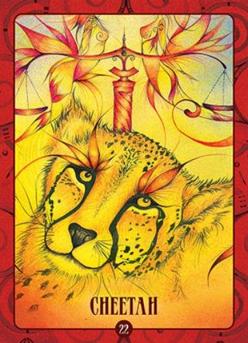 Oracle kortos Ancient Animal Wisdom Paveikslėlis 8 iš 13 310820142568