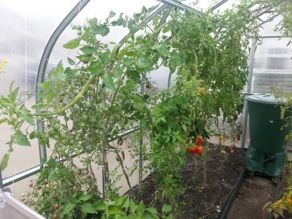 Greenhouse Standart KLASIKA 30 with substructure, 2,5x12 (30m2) su 4 mm.polikarbonato danga Paveikslėlis 5 iš 5 238700000220