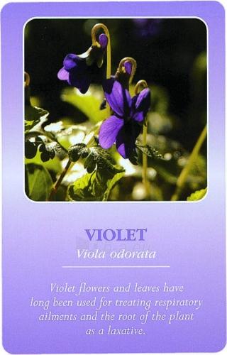 Taro Kortos Herbal Recognition Paveikslėlis 2 iš 6 310820142735