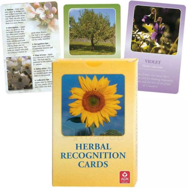 Taro Kortos Herbal Recognition Paveikslėlis 4 iš 6 310820142735